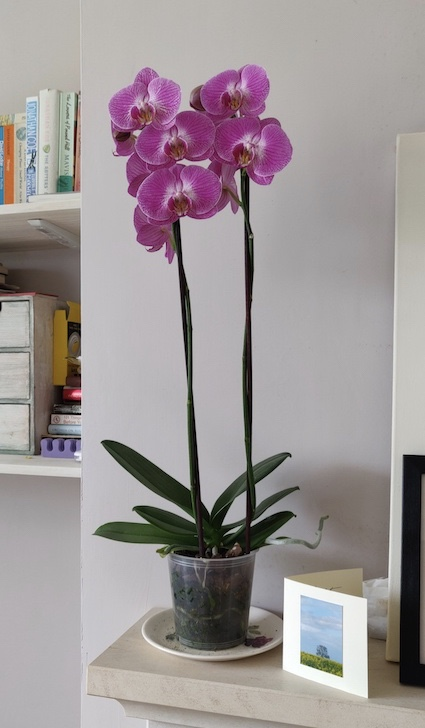Orchid-on-mantlepiece